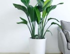 广州绿植配送,广州大型植物配送,办公室绿植到家