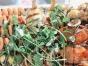 莆田哪里有海鲜碳烤烩培训 海鲜碳烤烩培训多少钱
