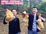 深圳农家乐 野炊烧烤 周末较好玩的农家乐 日月潭渡假山庄