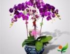 广州质量**的花卉租赁公司