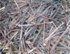 高阳高价回收废紫铜线