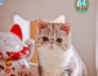 家庭式繁育加菲猫