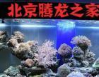 腾龙水族清洗鱼缸鱼缸养护鱼缸消毒鱼缸搬家