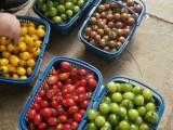 踏青旅游 上海農家樂一日游 采草莓吃土菜 垂釣燒烤劃船