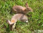 兔子肉怎么做好吃