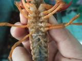 保定小龙虾批发,保定水产批发,保定海鲜批发