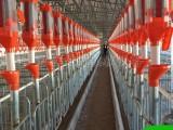 自动化猪场料线 猪用喂料设备 自动上料系统 大概多少钱
