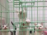 MEOW猫生活馆: 宠物猫专卖店。