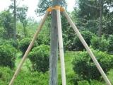 内蒙古自治区树木支撑支架哪家性价比高就选欢庆木材