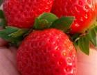 磁化水栽培純有机生态牛奶草莓基地