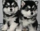贵阳宠物领养救助基地有大量宠物等待大家领养 赠送小狗
