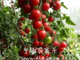 上海農家樂一日游  自助燒烤 垂釣唱歌 采葡萄西瓜小番茄