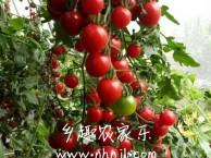 上海农家乐一日游 采西瓜甜瓜摘番茄 钓小龙虾 享受田园乐园