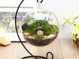 微景观悬挂玻璃吊球 铁艺吊瓶 苔藓微景观玻璃斜口圆球挂件花瓶