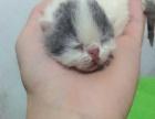 精品加菲猫宝宝出生啦