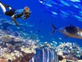 暑假特惠 魅力沙巴 热带雨林 浪漫海岛 潜水 纯玩双飞六天五晚