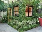 室内绿化养护 专业植物租摆 园林工程