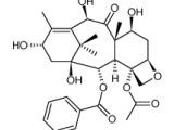 10-脱乙酰巴卡丁 (10-DAB I)