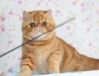 南宁哪里有加菲猫卖 自家繁殖 品相极佳 多只可挑
