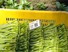 宁夏鑫茂原专业合作社万亩供港蔬菜种植基地