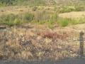出租义县土地,200亩果园转让,做其他也可