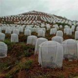 志广丝网果树防虫网40目聚乙烯材质