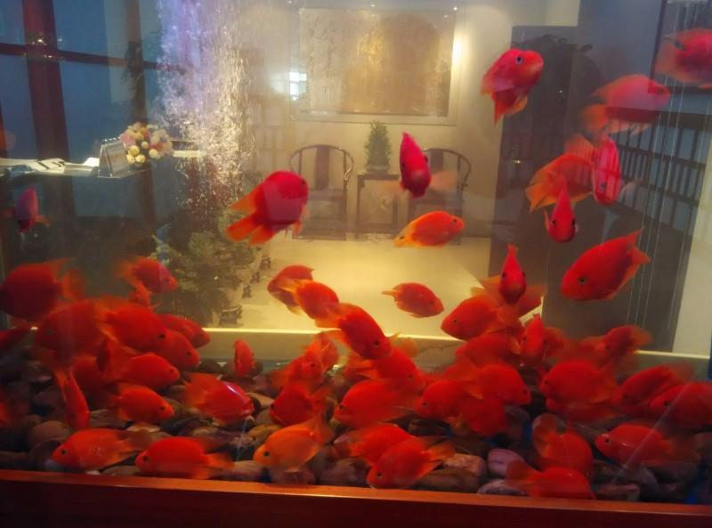 昆明鱼缸清洗,昆明鱼缸维修