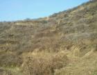六里坪孙家湾30亩土地出租 适合养殖