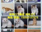 猫舍出售布偶猫 加菲 美短 英短 金吉拉等多个品种可上门挑选
