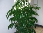 常州花木绿植出租室内绿化服务
