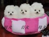 张家口官方认证宠物领养中心 多品种狗狗赠送
