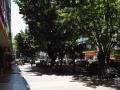 南山学府路正街商铺出租100平的餐饮店铺