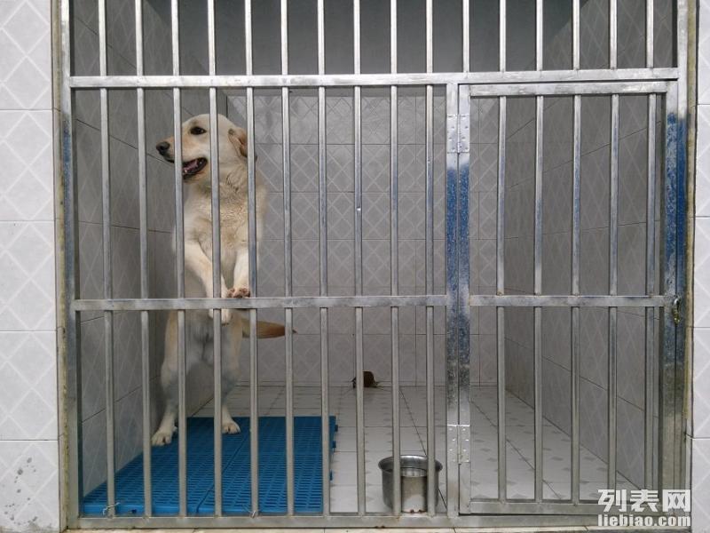 狗狗不聽話就找成都家寶訓犬學校,您身邊的訓犬專家