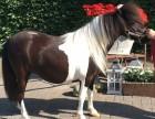 景点骑乘小矮马多少钱一匹河南周边有卖的吗