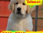 金毛幼犬——送狗用品——24小时营业——可刷卡