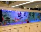 观赏鱼 鱼缸水族器材出售