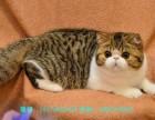 宁波哪里有波斯猫卖 纯种 无病无廯 协议质保