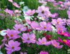 南昌撒播花种销售江西撒播花种销售广东花种湖南花种