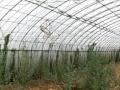 长湖桥 南堡 大棚土地 25亩