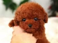 台州哪里有宠物狗出售 台州哪里可以领养小狗