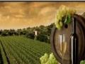 CMP巴黎庄园葡萄酒 CMP巴黎庄园葡萄酒诚邀加盟