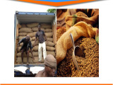HA|印尼咖啡进口报关可可豆清关代理|费用|流程gtD