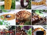 玳瑁手镯价格多少,玳瑁品牌怎么样,玳瑁里面的产品都是正品吗