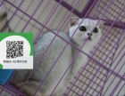 绵阳哪里卖折耳猫 绵阳哪里有宠物店 绵阳哪里卖宠物猫便宜