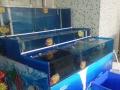承接大型水族工程:海鲜池设计定做、安装、海鲜池制冷