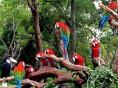 鹦鹉出售,购买鹦鹉,鹦鹉养殖场,那里有卖各种大型金刚鹦鹉