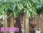 广州绿植花卉租赁 室内外绿化养护施工