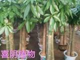 廣州綠植花卉租賃 室內外綠化養護施工