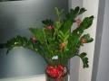 雅蕴花卉租摆大回馈花卉租摆租赁、绿植出售生日鲜花速
