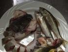 桂林第一家纯正野生鱼馆